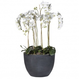 Dark Planter UK