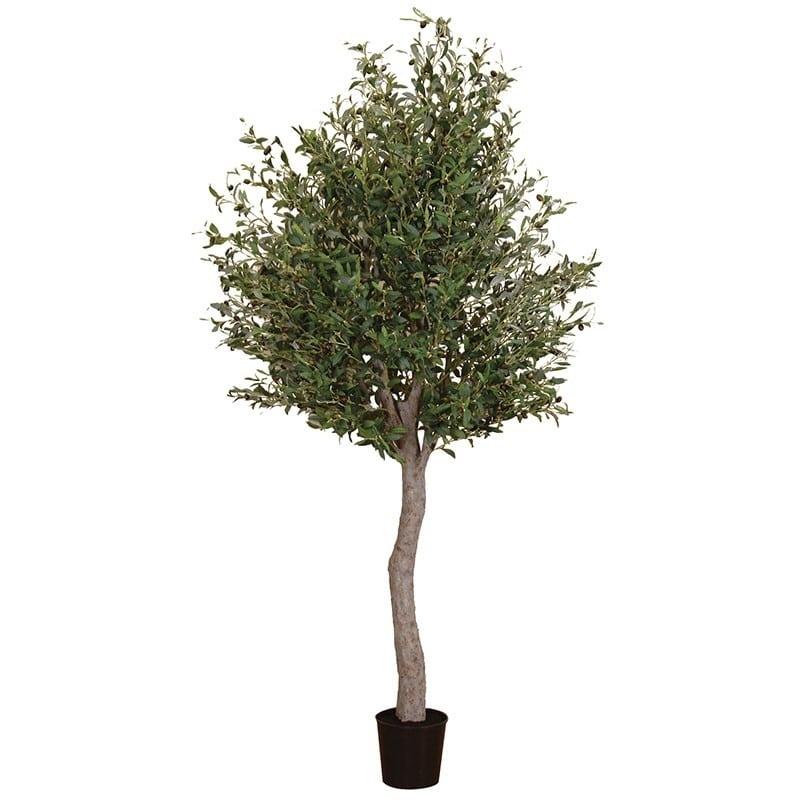 Olive Tree UK