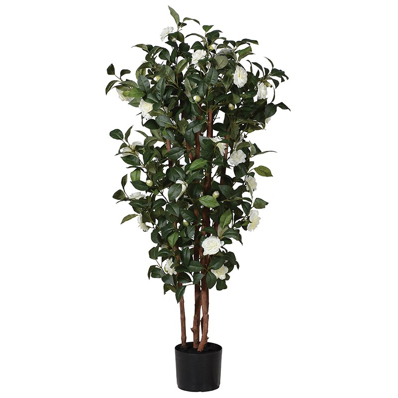 Camelia Tree UK